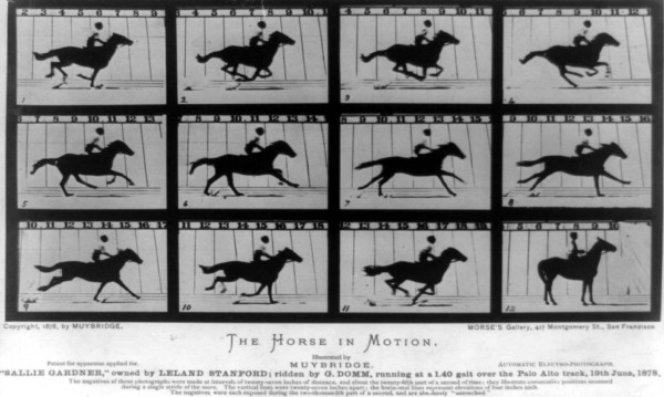 The Hosrse in Motion by Eadweard Muybridge