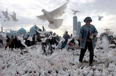 2002 Pulitzer Pakistan